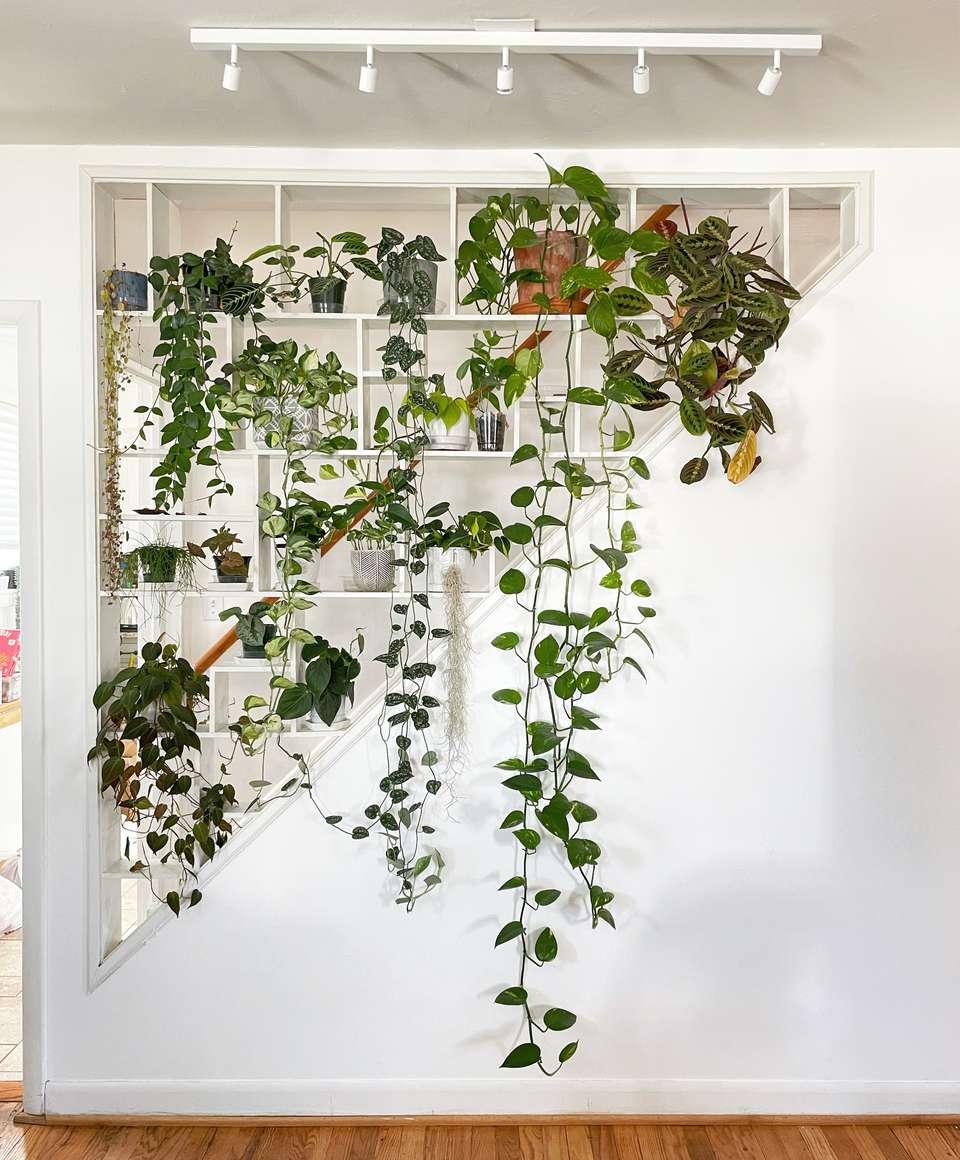 Gorgeous plant shelfie by Caitlyn Kibler of @ohokaycaitlyn #PlantShelfies