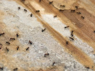 22+ How To Get Rid Of Flies In The Backyard Pics - HomeLooker
