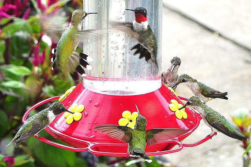Busy Hummingbird Feeder