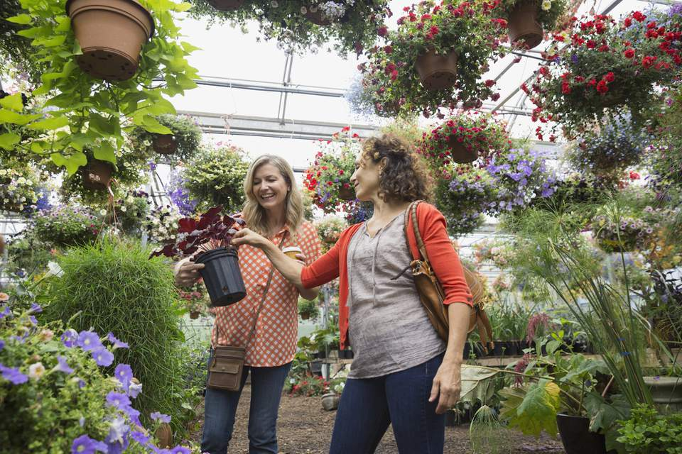Women shopping for plants at plant nursery greenhouse