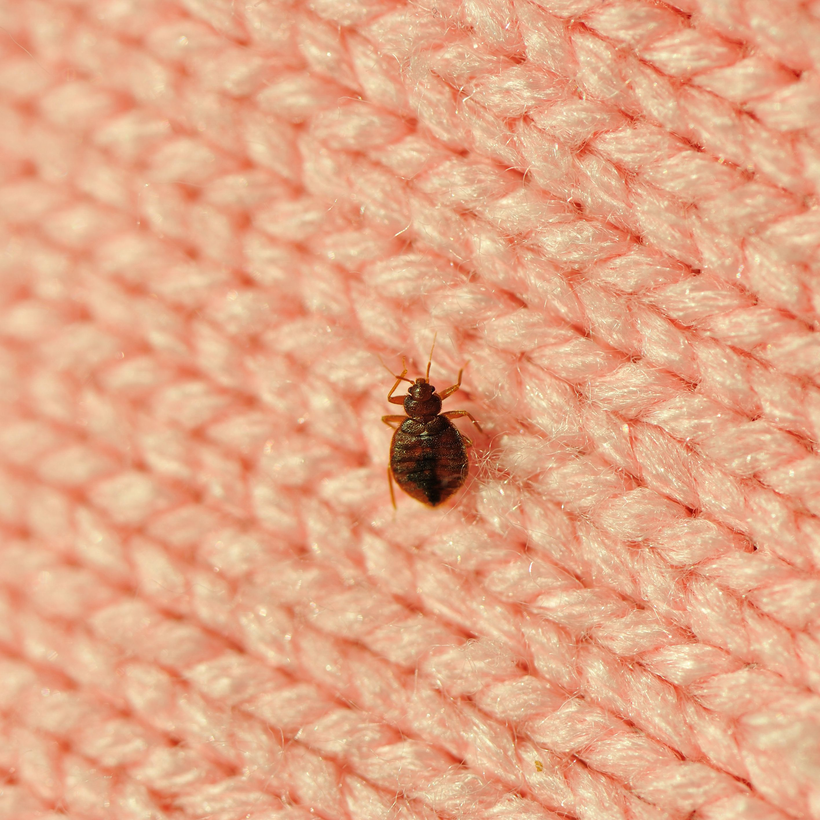 How To Treat Bed Bugs In Furniture