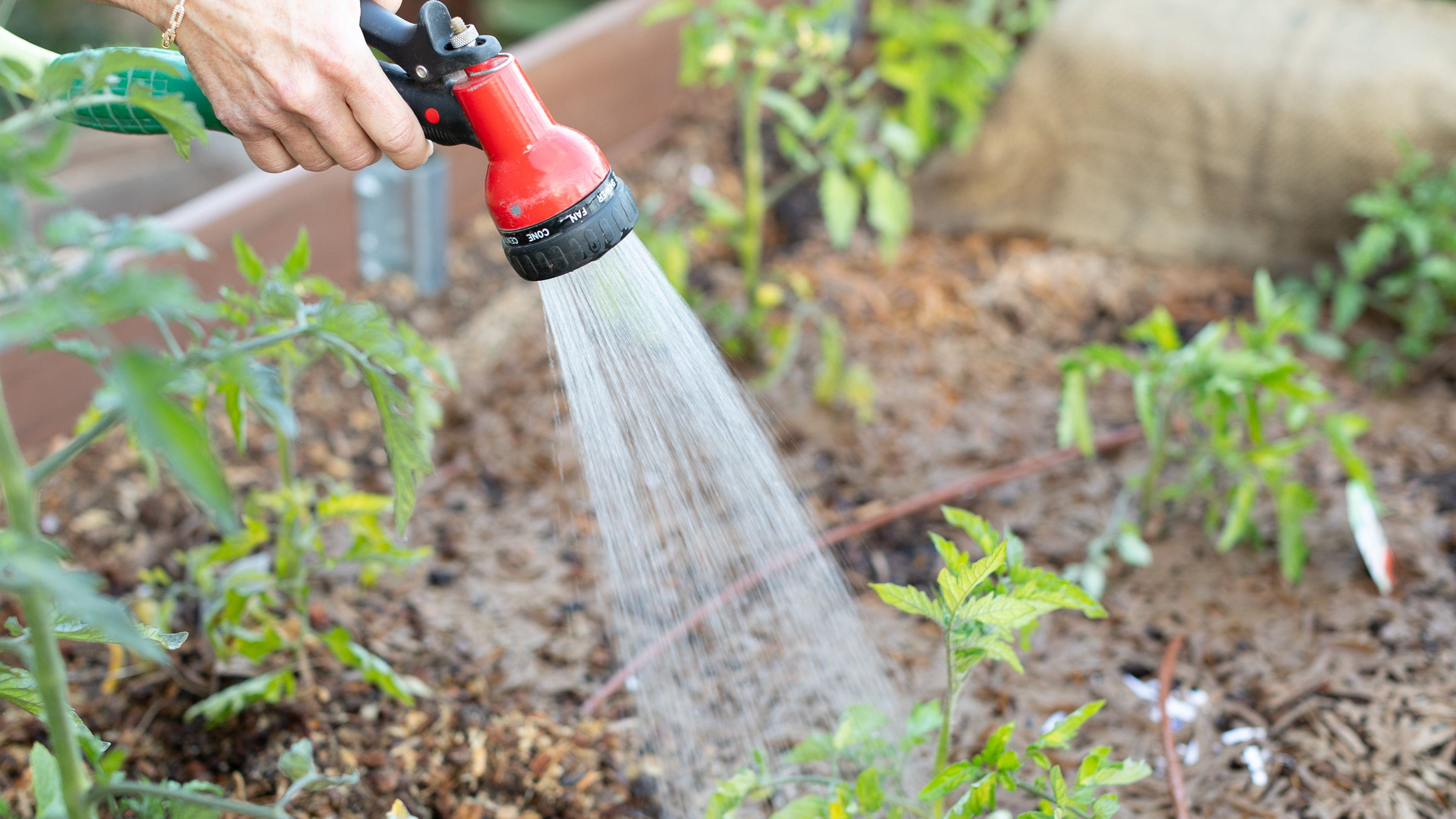 When Is the Best Time to Water Plants