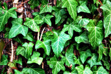 Flammable Plants to Avoid Having in Your Garden