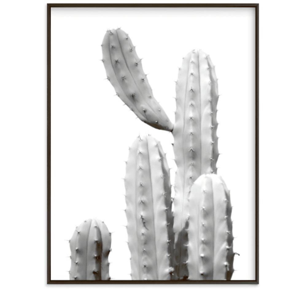moorten cactus study 1