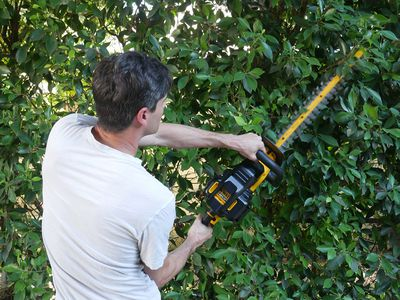 The 7 Best Cordless Hedge Trimmers of 2019