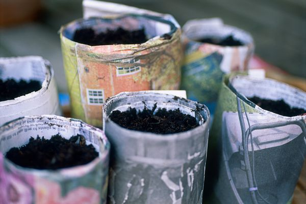 Planted seeds in rolled newspaper containers