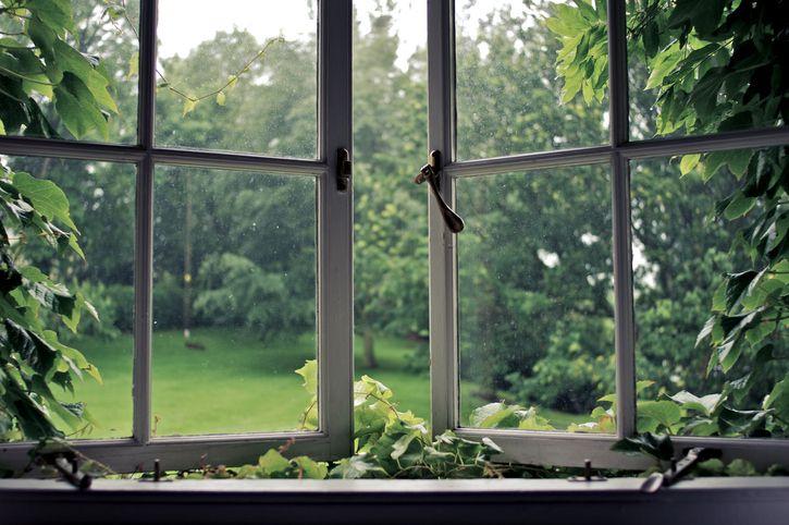 Windows open ajar to vines