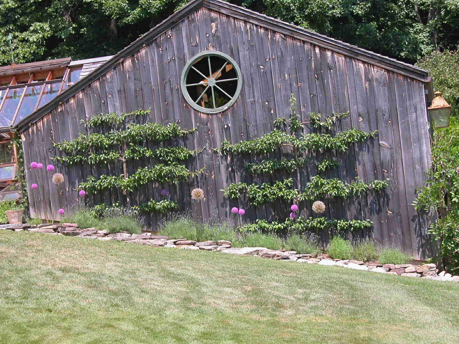 Fruit trees growing near a shed.