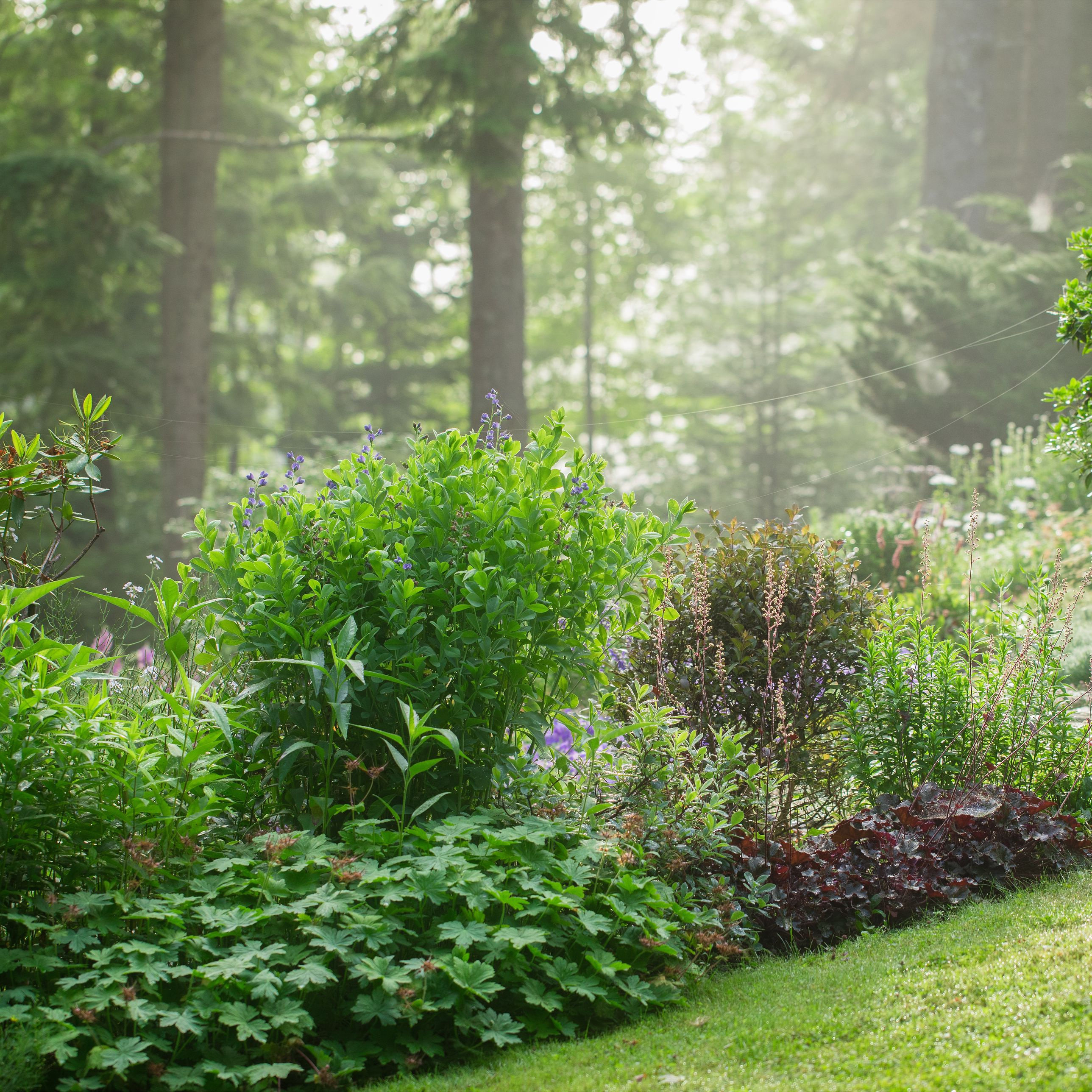 How To Get Free Plants For Your Garden
