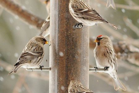 - How To Attract Winter Finches