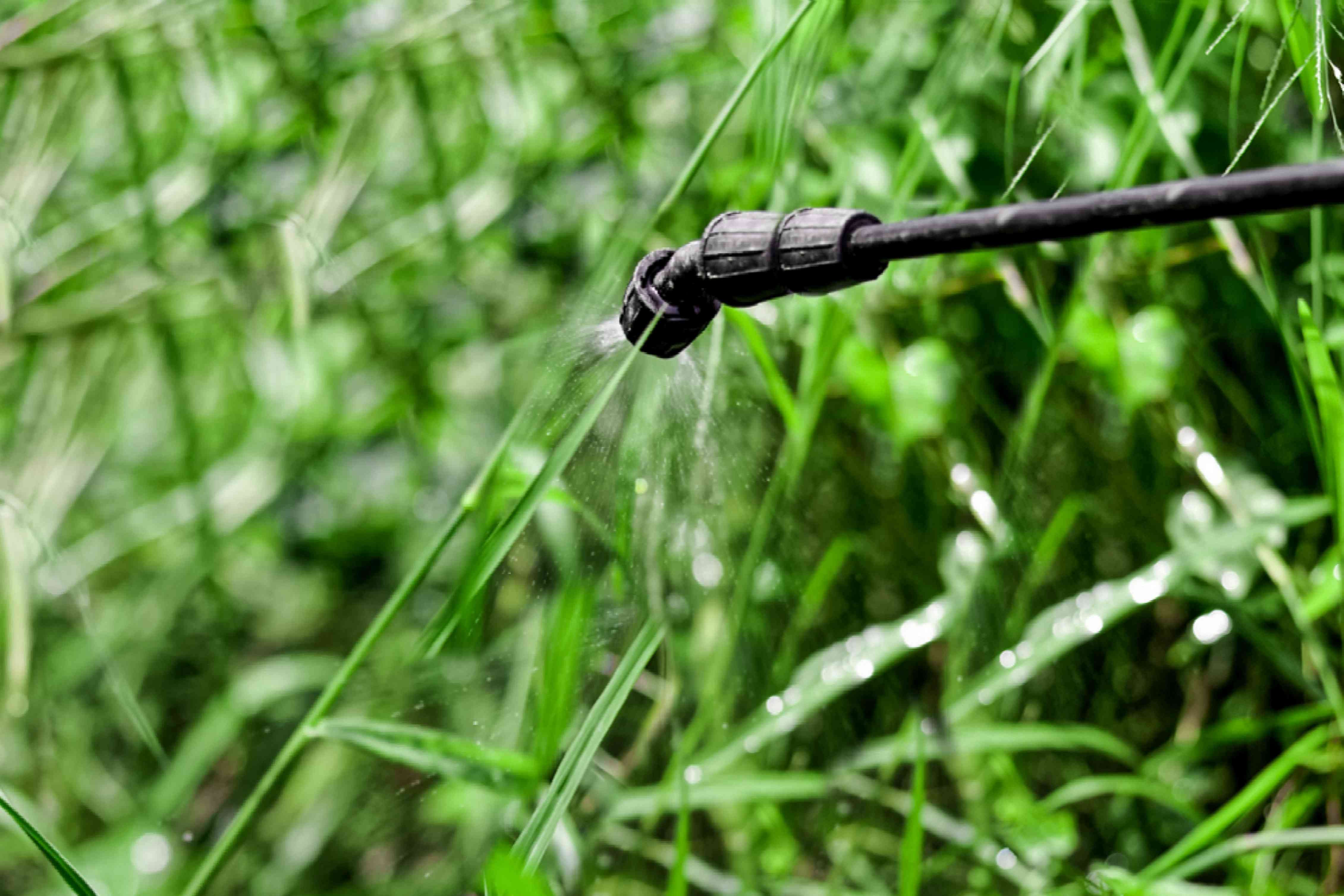 using herbicide on a lawn to control weeds