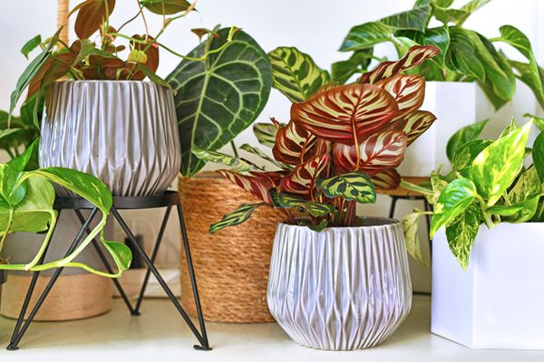 A variety of potted tropical houseplants on a white shelf.