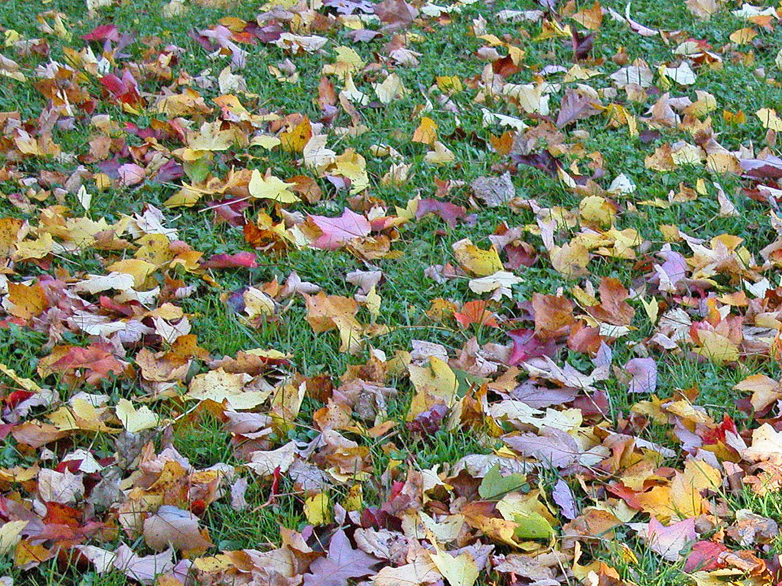 fallen leaves on grass