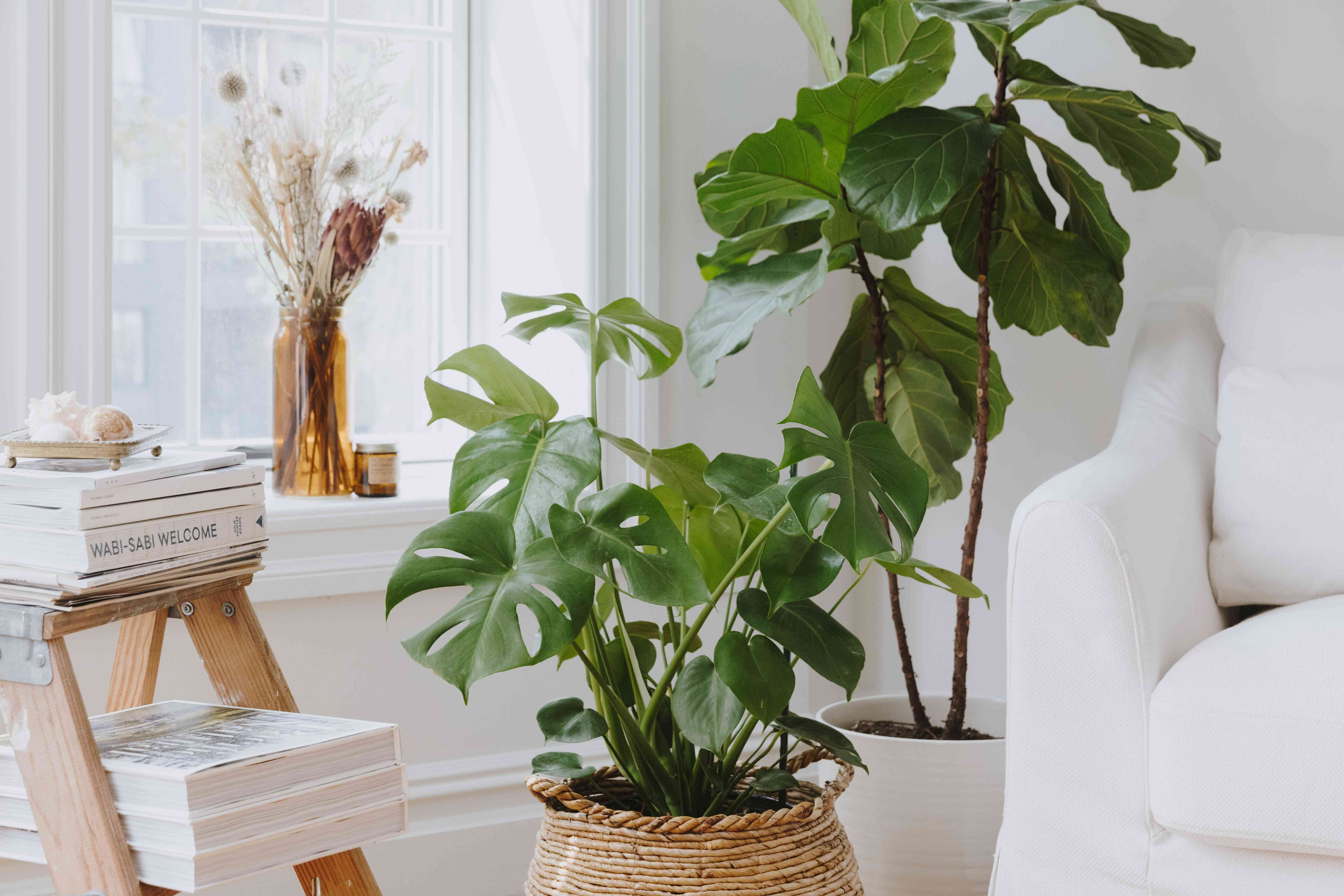 bringing greenery into a white room