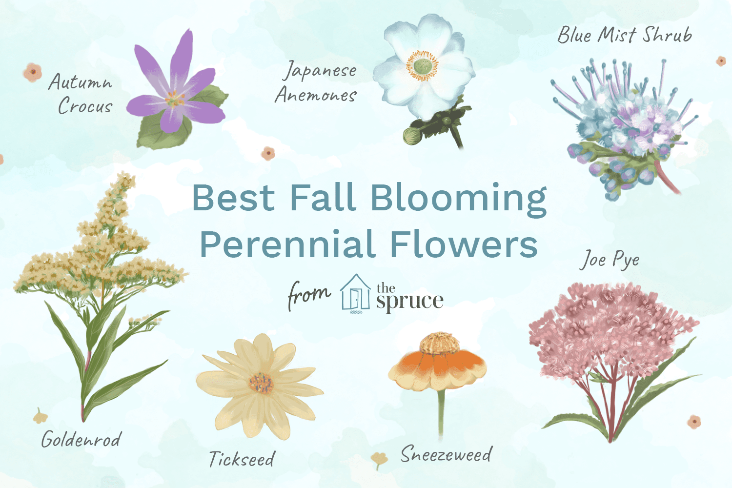 Top 15 fall blooming flowers for a perennial garden izmirmasajfo
