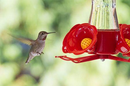 Hummingbird Feeder In Spring