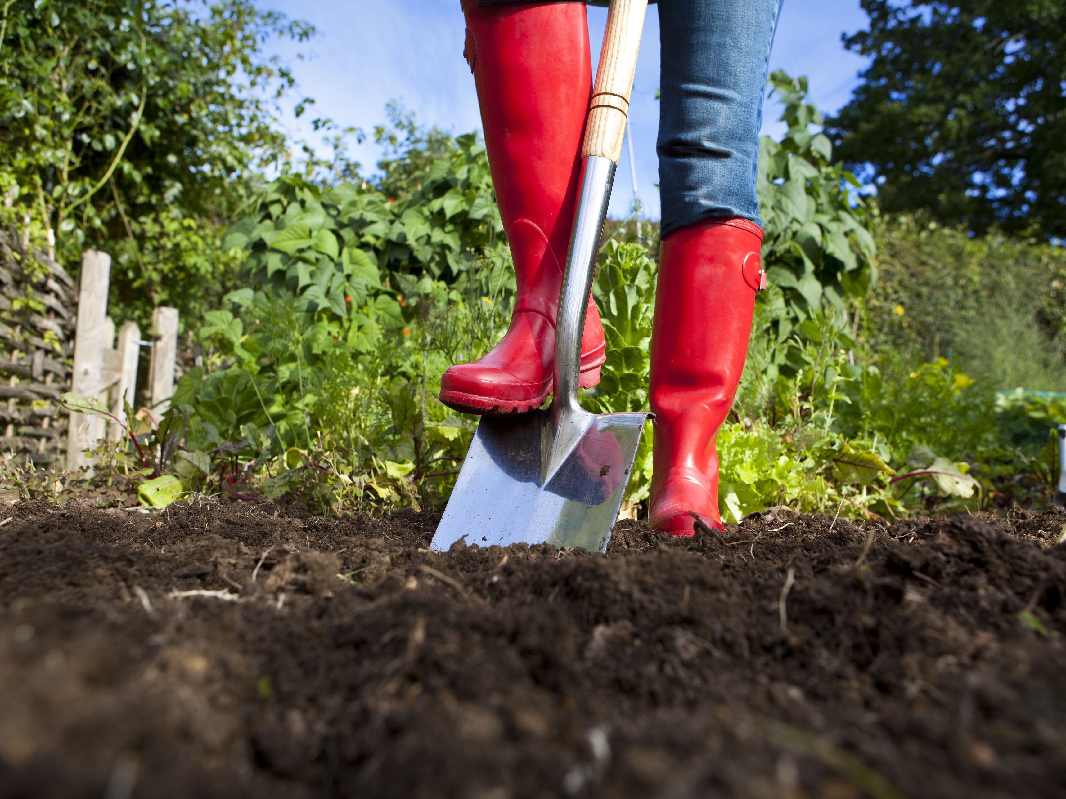 Safety Tips For Using Manure In Your Vegetable Garden