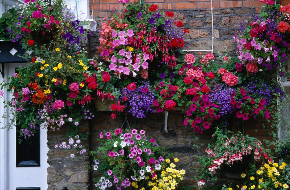 A series of hanging flower baskets