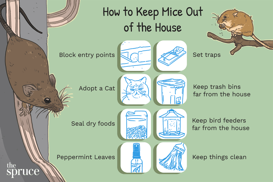 How to Keep Mice Out of the House