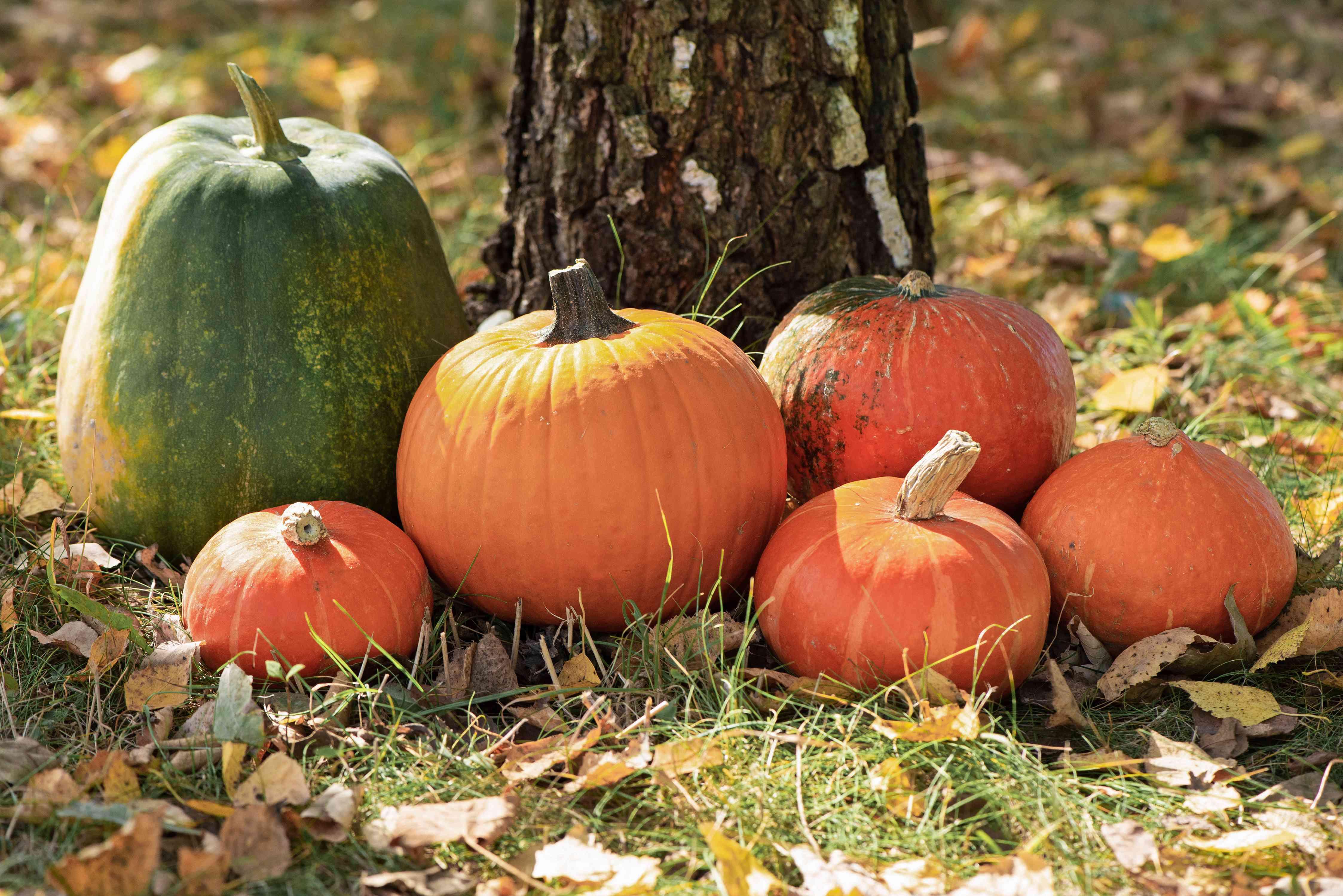 classic orange pumpkins