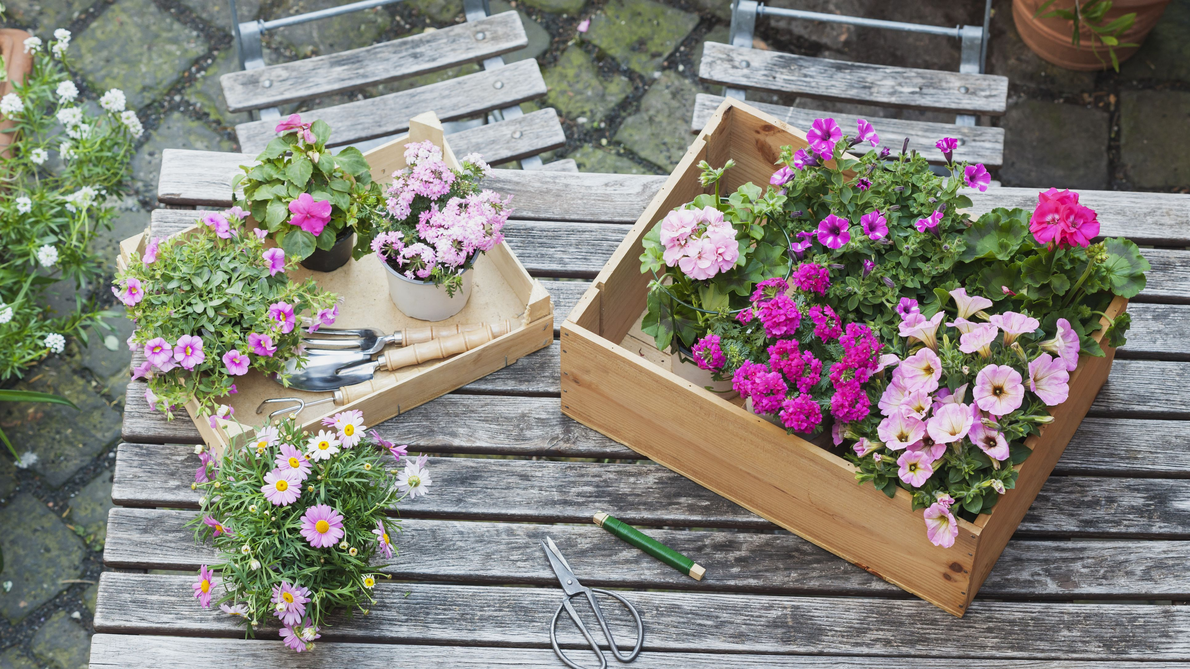 How To Choose The Right Petunia