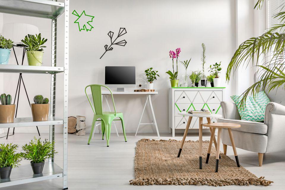 Plantas de interior para un diseño moderno del hogar