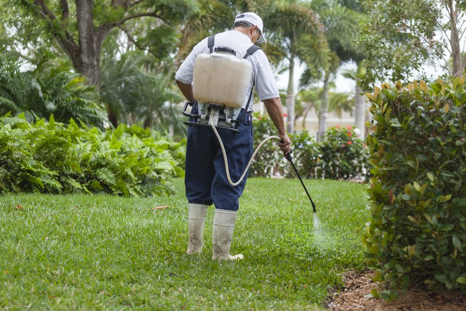 Man spraying Pesticide on a green lawn
