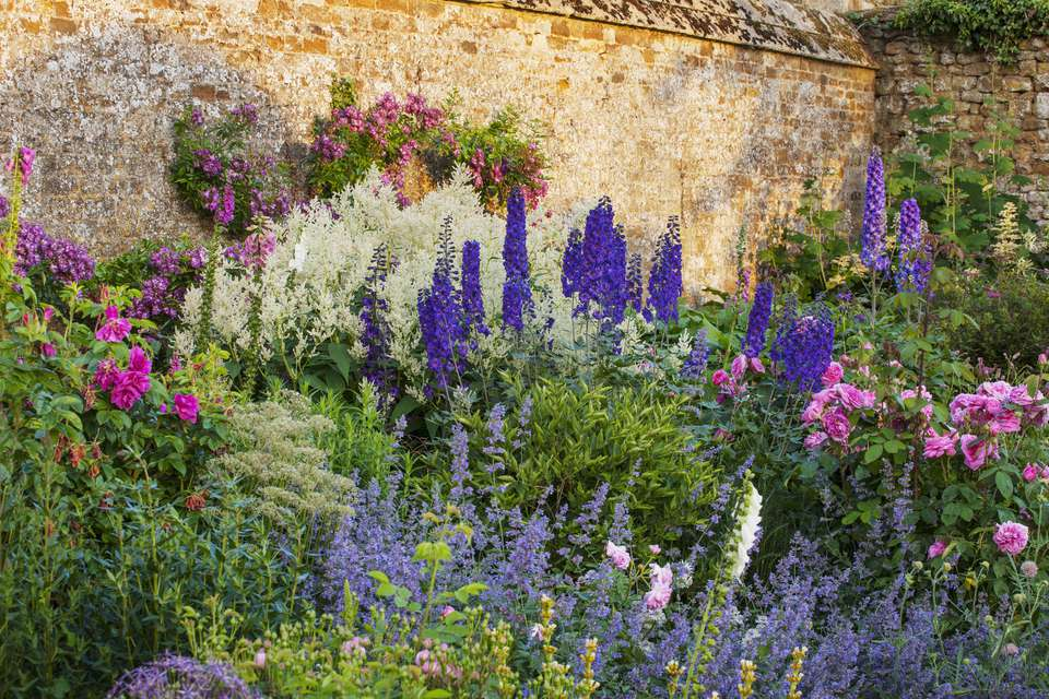 Delphiniums standing tall amidst a mass of other flowers in a courtyard garden.