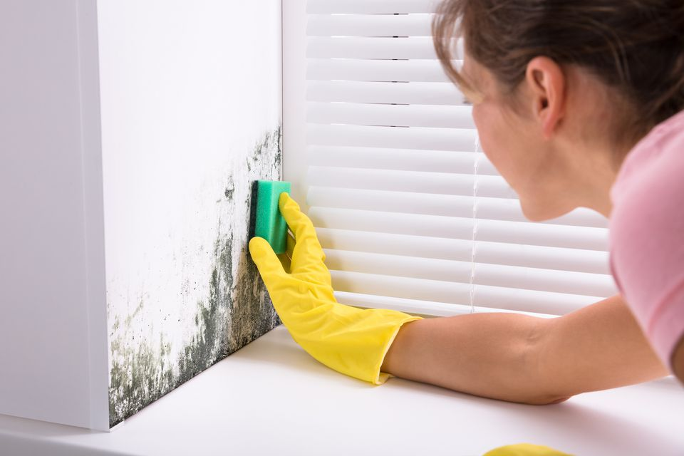 Woman scrubbing mold on wall
