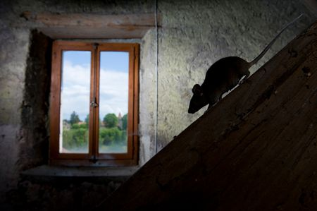 Swell 12 Common Questions And Answers About Mice In The House Home Remodeling Inspirations Genioncuboardxyz