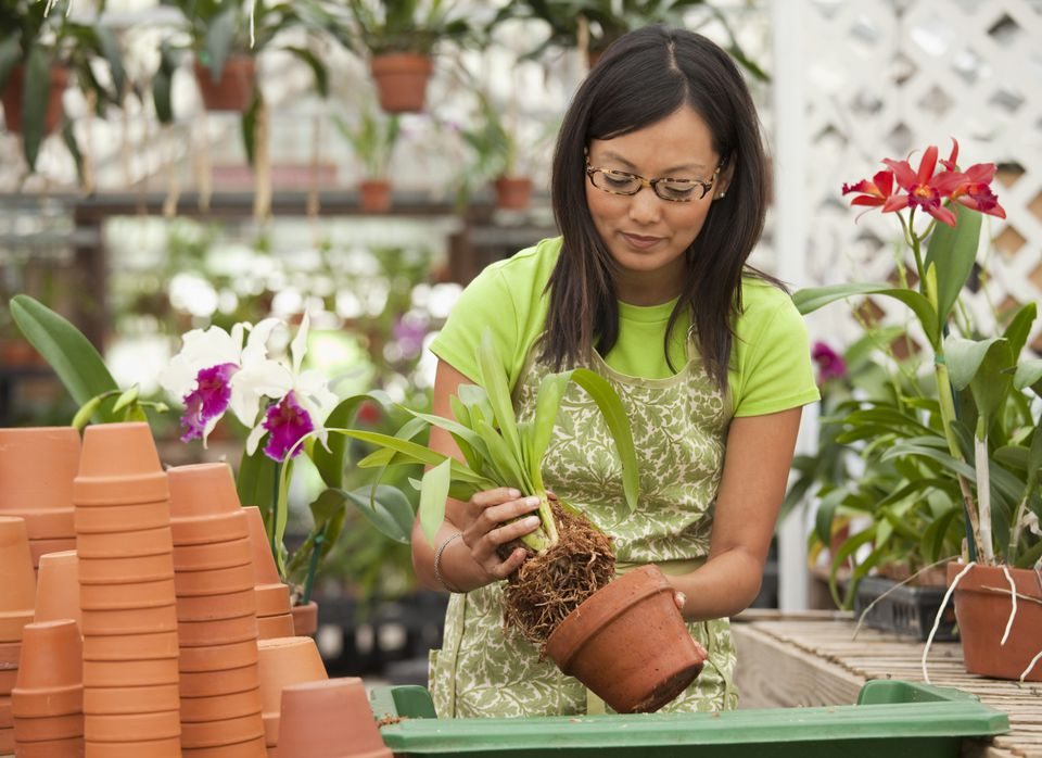 Orchid Potting