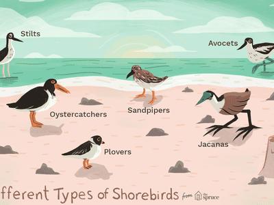 Proper Names for a Flock of Birds