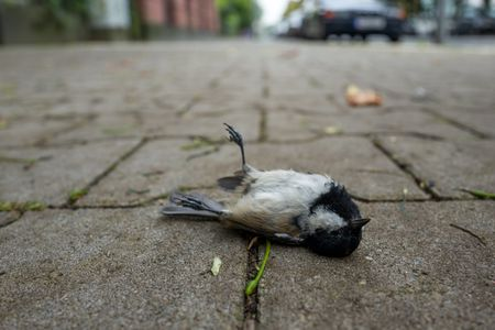 Dead Bird Removal - Safe and Responsible