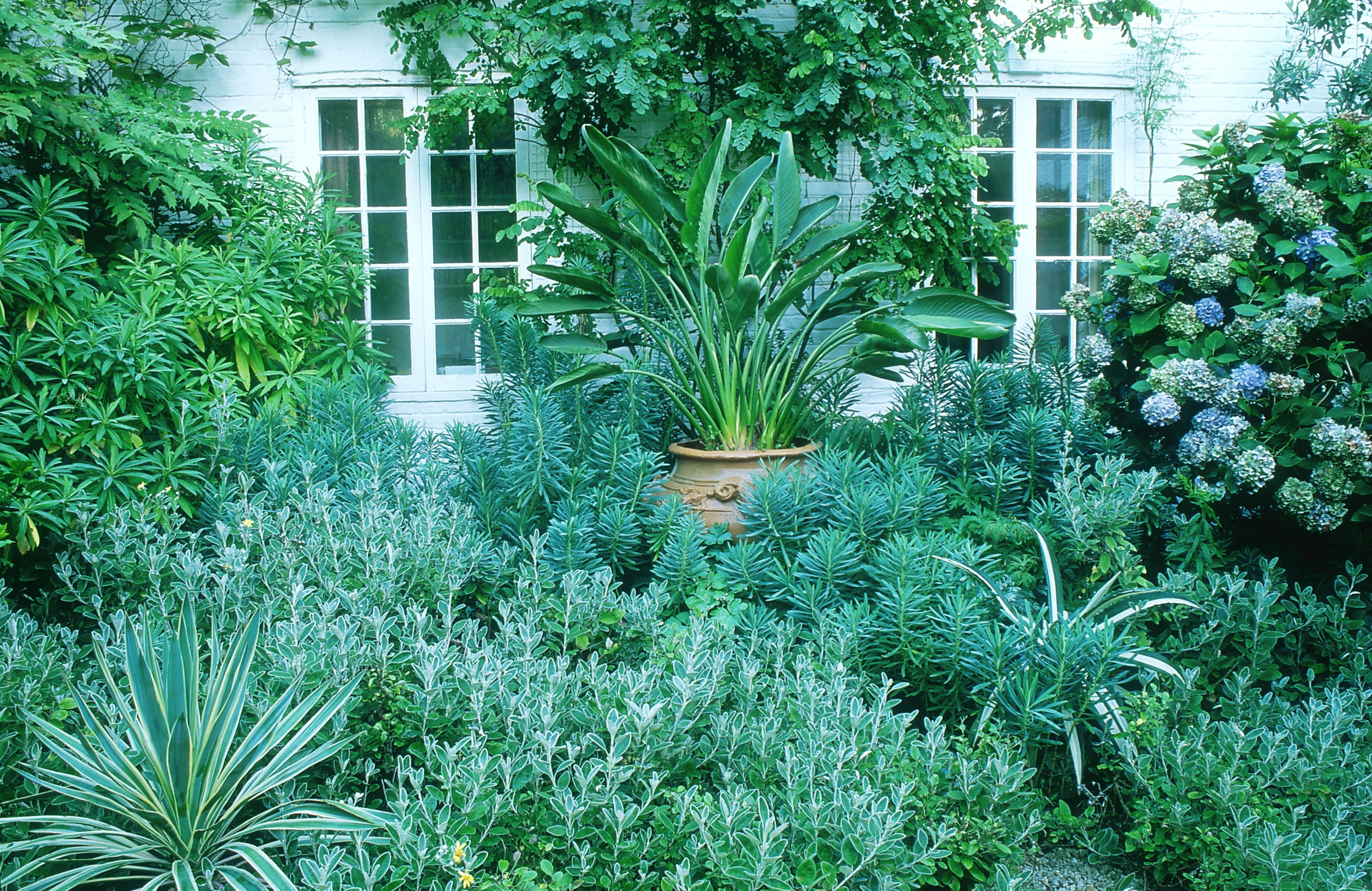 Home garden with foliage plants