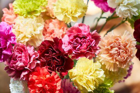 13 Top Varieties For Cut Flowers