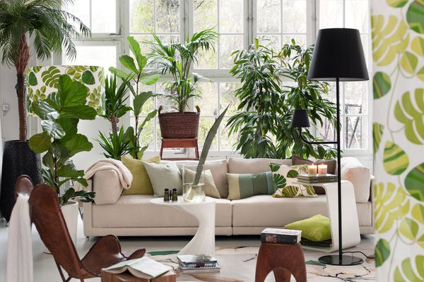 a plant filed home can bring in good feng shui