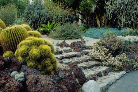 Beautiful Cactus Garden