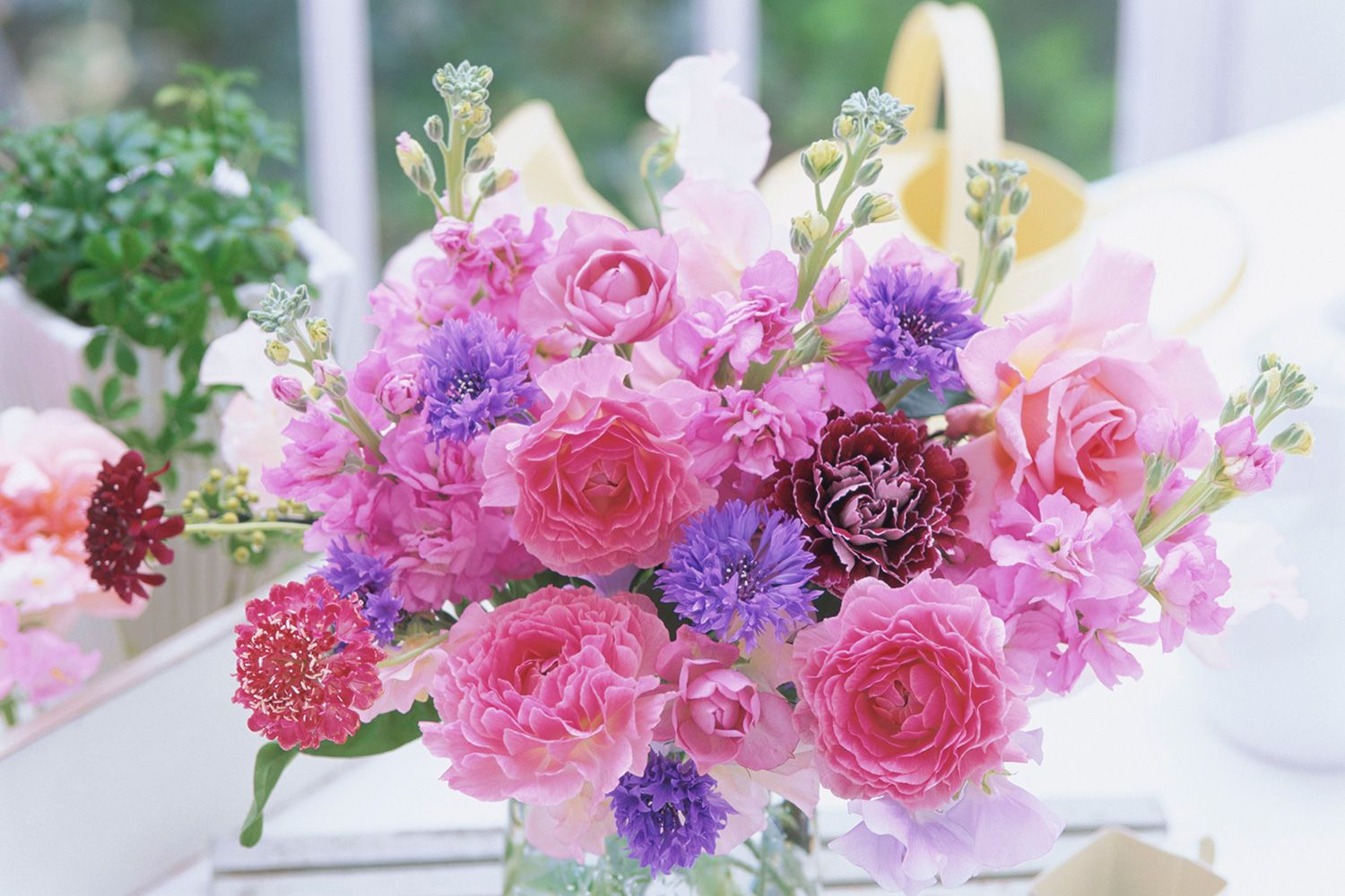 Learn the best flowers for all occasions izmirmasajfo