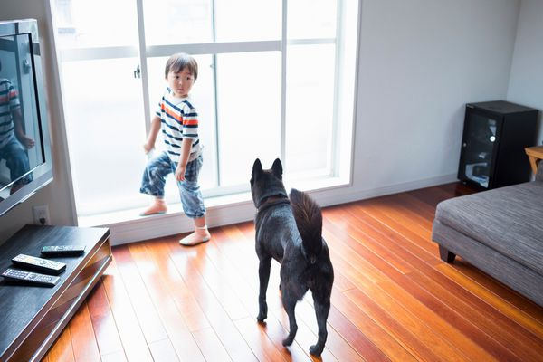 Dog Scratching Wooden Floor