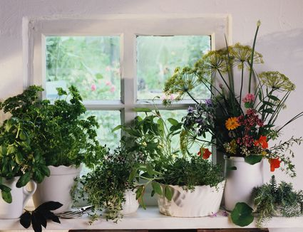 How to Properly Fertilize an Indoor Herb Garden