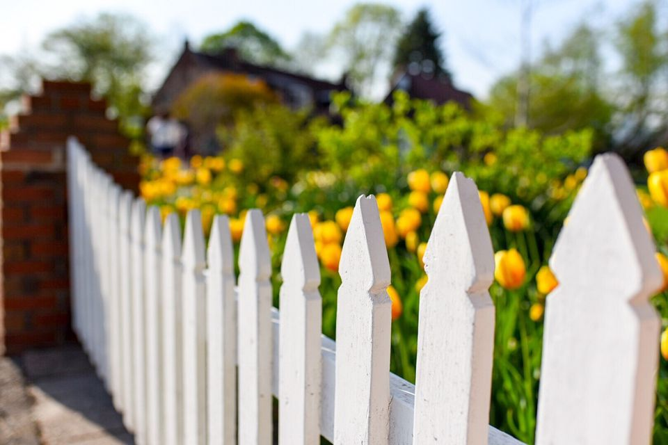 White picket fence with yellow tulips planted in back.