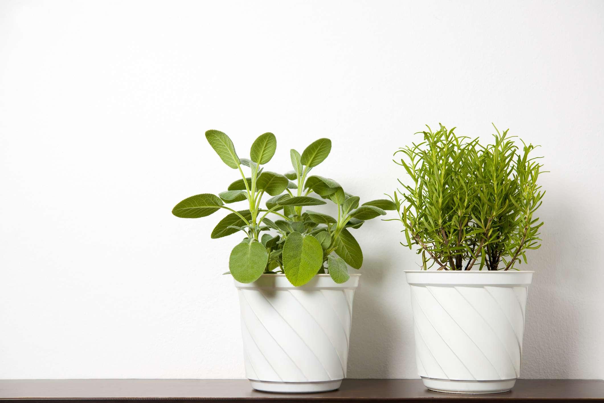 Plantas bien alimentadas en macetas