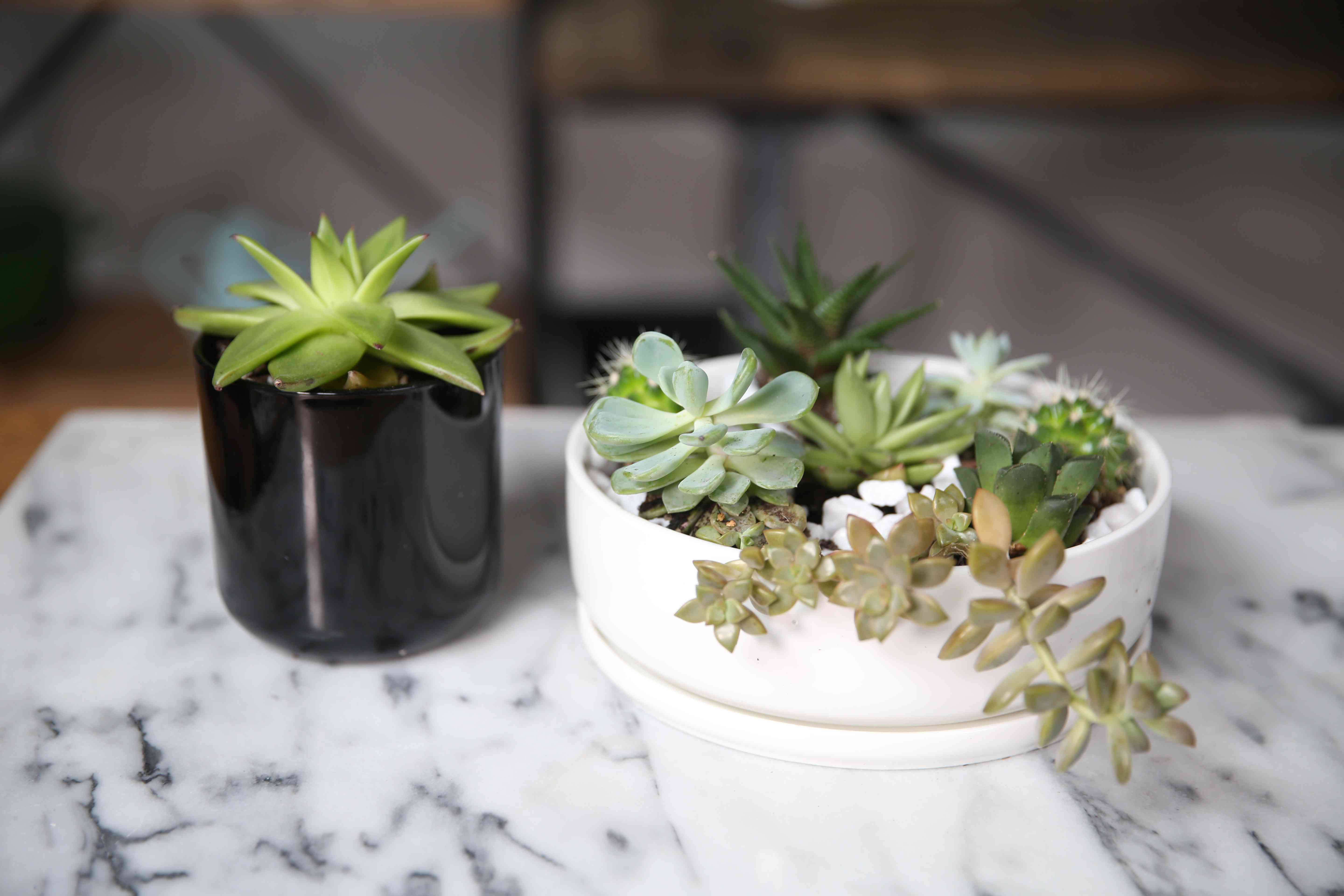 a black and a white pot with succulents