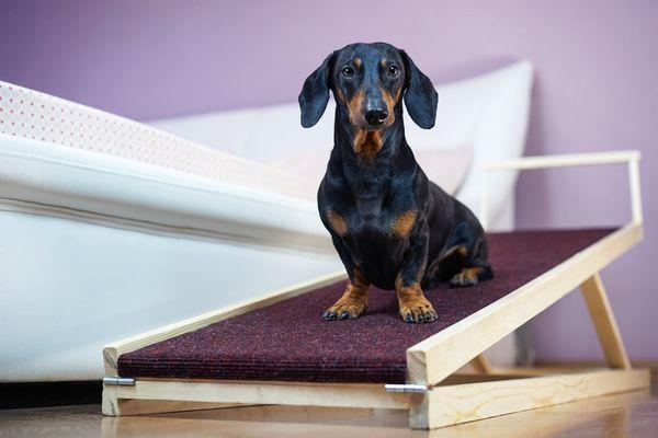 Dog on DIY dog ramp