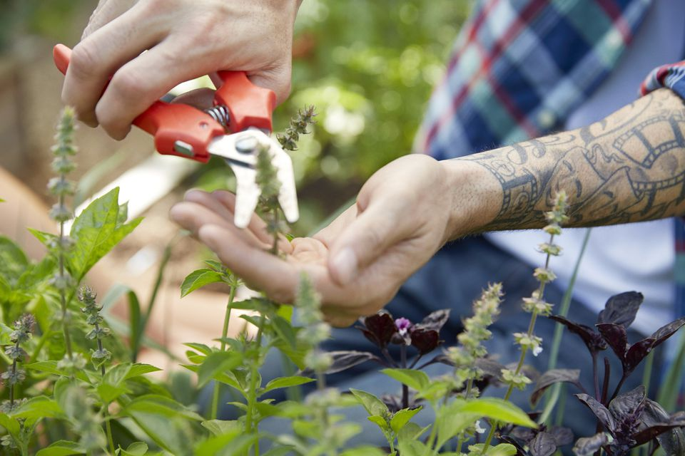 Plant pruning -- or deadheading -- for optimal garden appeal and health