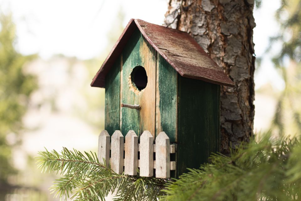 Wooden green birdhouse on side of pine tree with branches underneath