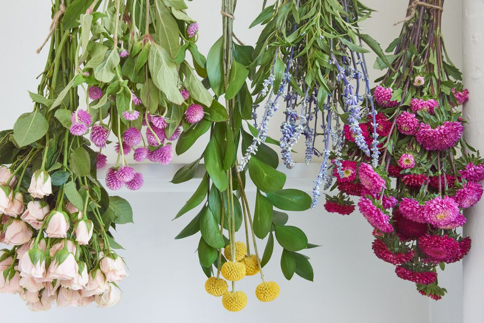 Flowers hanging upside down to be dried