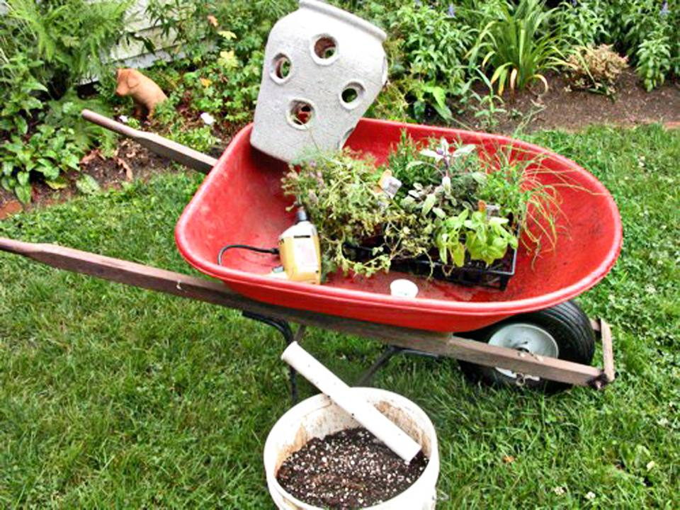 Plants in a wheelbarrow with a strawberry pot