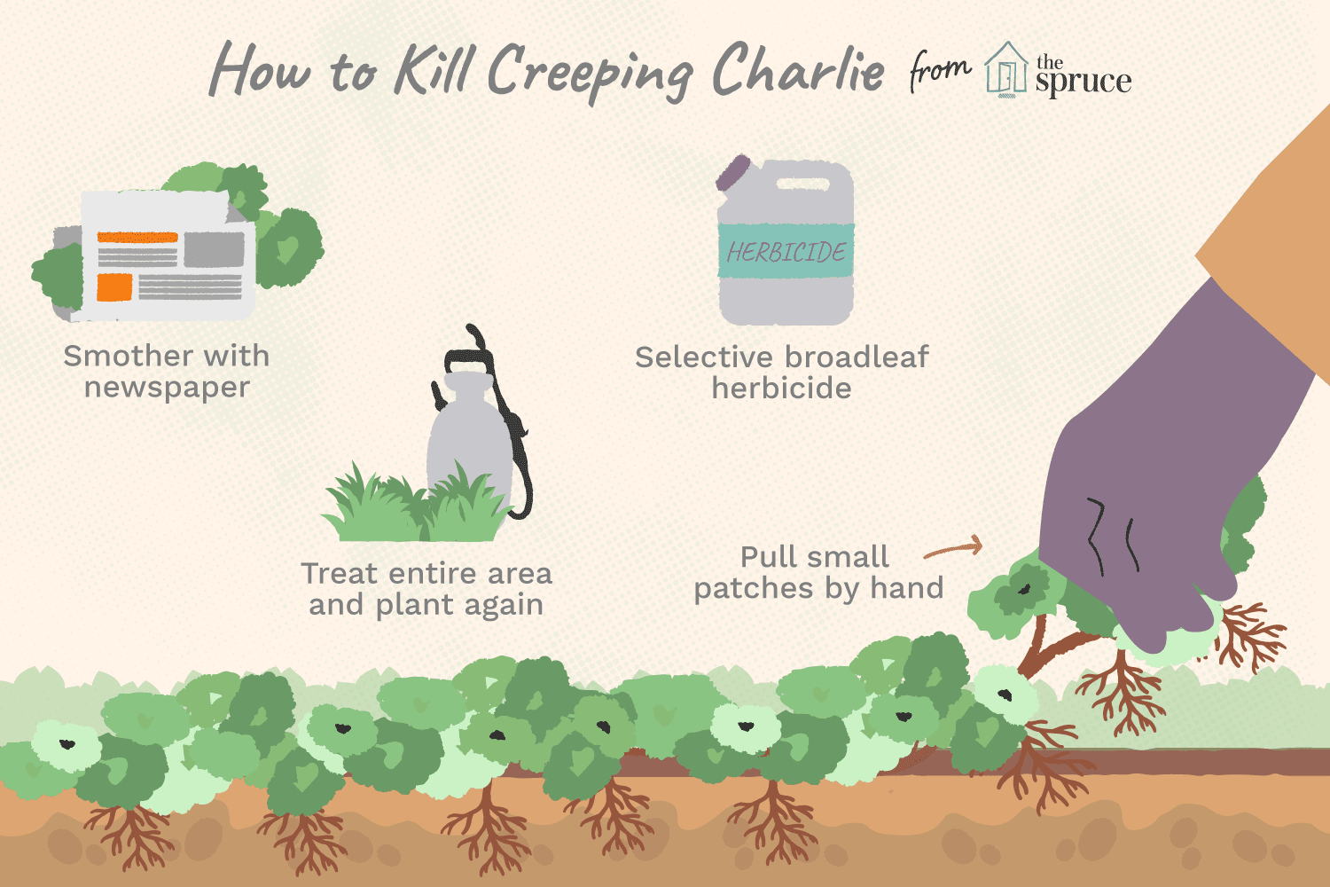 how to kill creeping charlie graphic