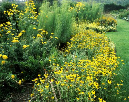 14 cheerful yellow garden flowers yellow herb garden mightylinksfo